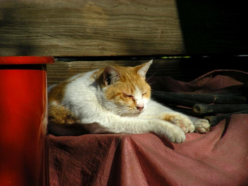 大寺の門と茶白猫2