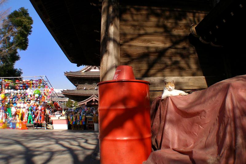 大寺の門と茶白猫3