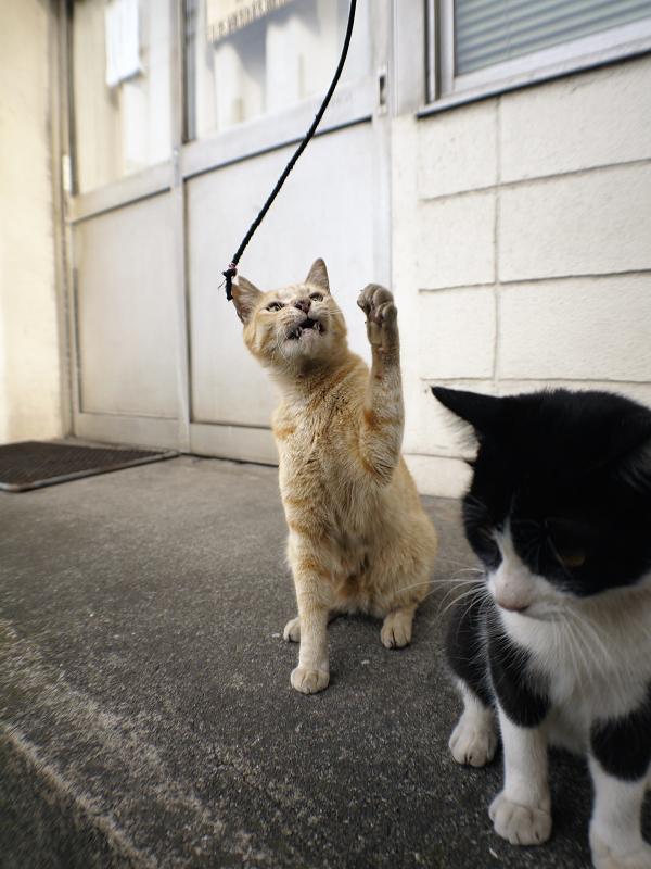 立ち上がった黒白猫と茶トラ猫2