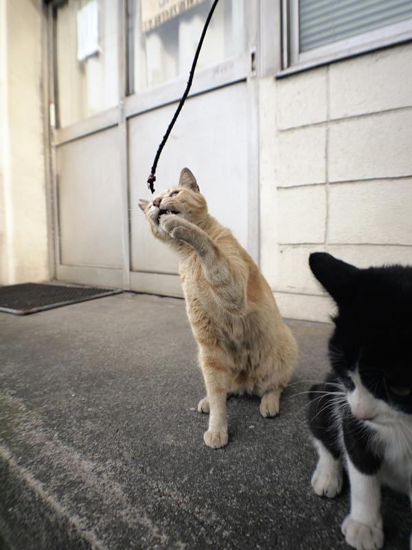 立ち上がった黒白猫と茶トラ猫3