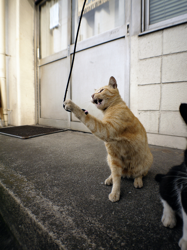 立ち上がった黒白猫と茶トラ猫4