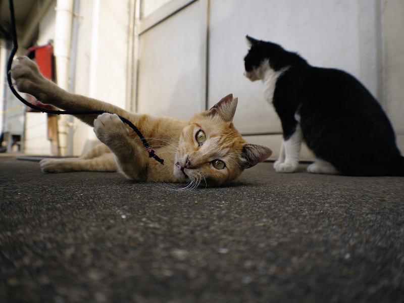 スキンシップ黒白猫1