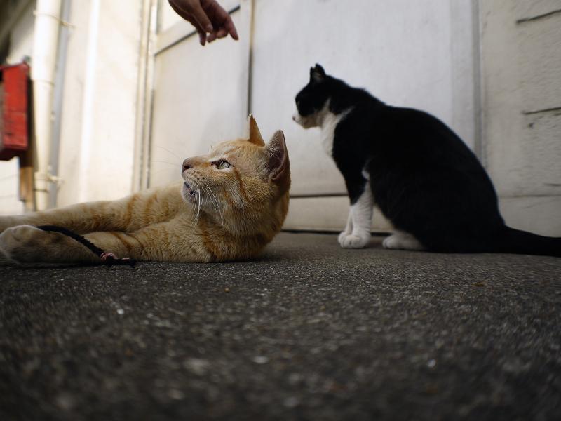 スキンシップ黒白猫2