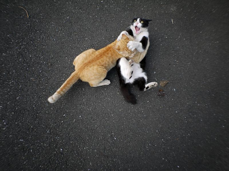掴み合ってる猫たち2