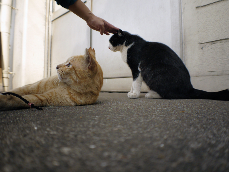 スキンシップ黒白猫3