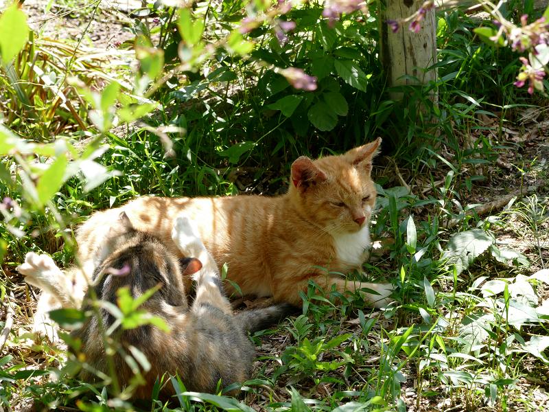 陽射しと仔猫たち2