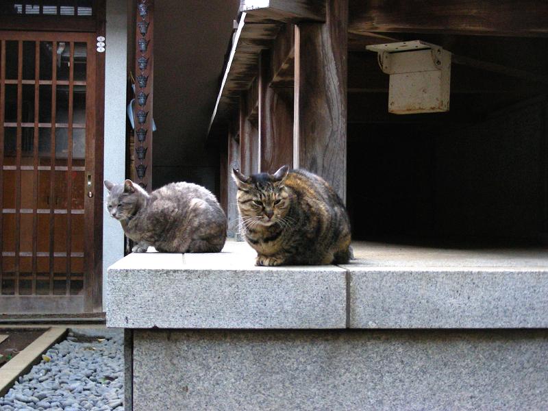 神社の友だち猫