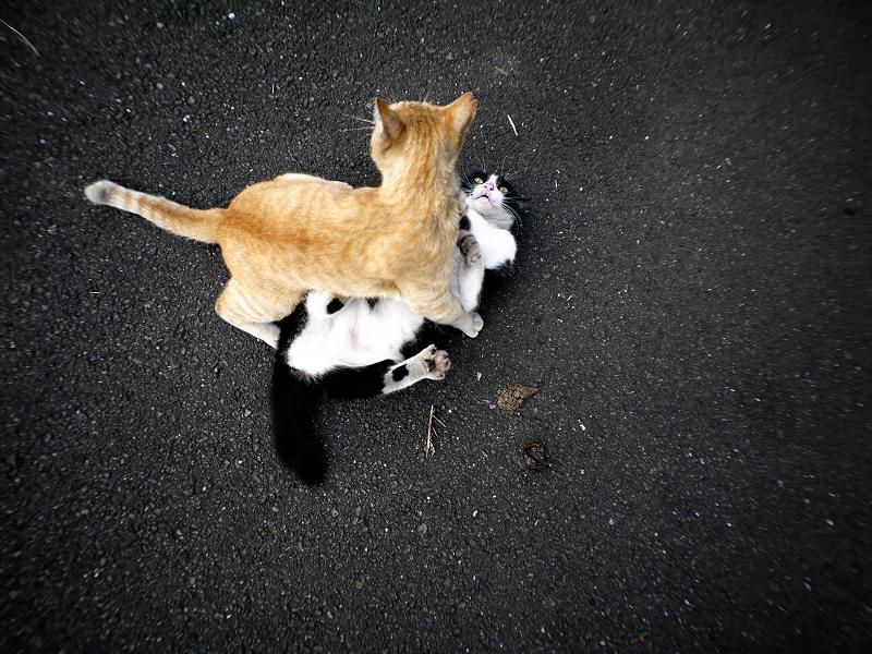 飽きずに暴れる猫たち2