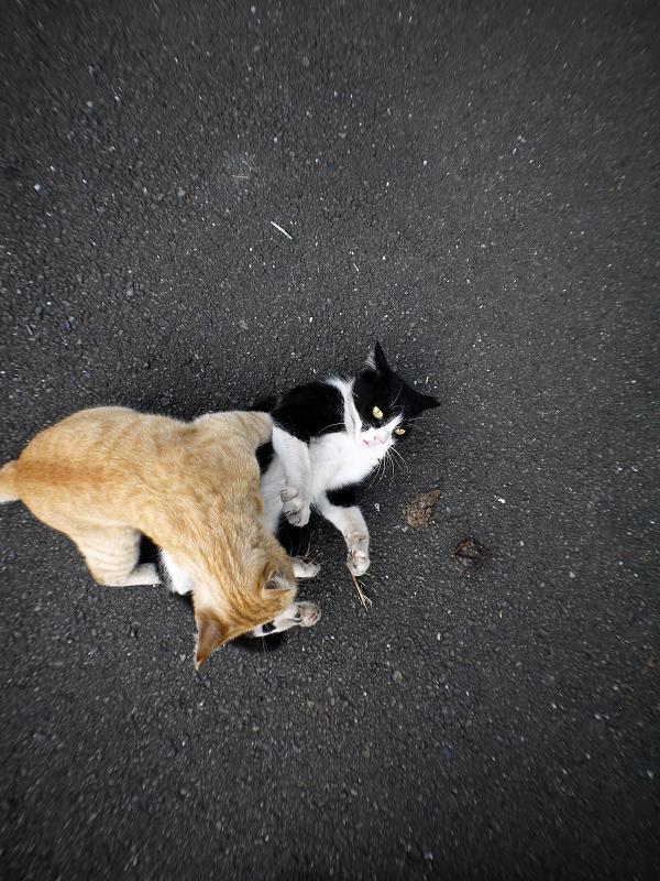 飽きずに暴れる猫たち3