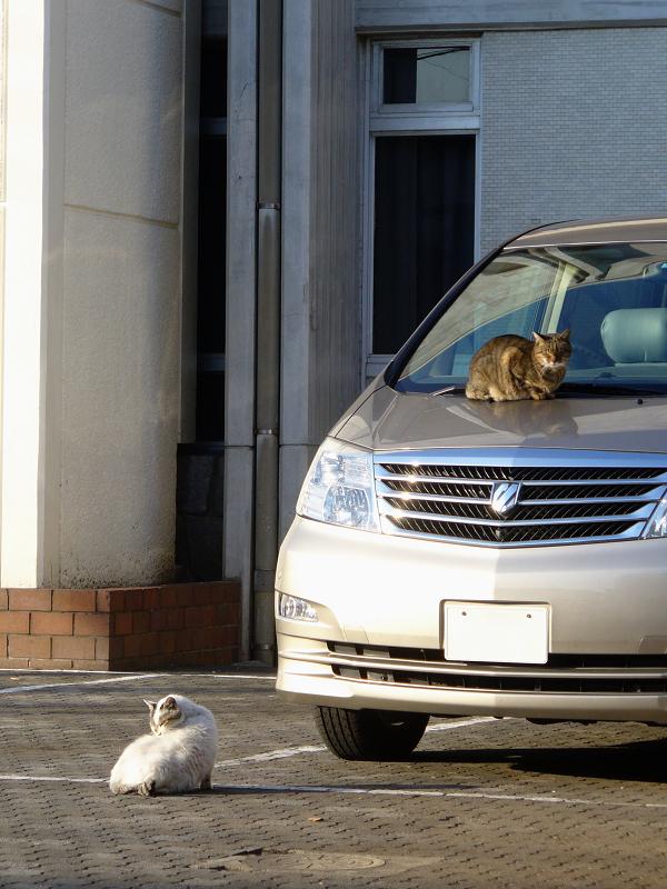 ワゴン車の猫たち1
