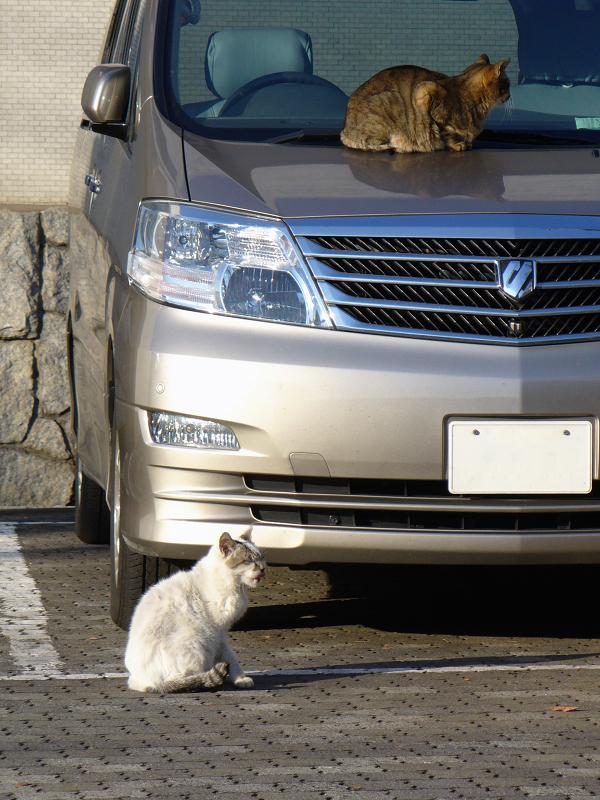 ワゴン車の猫たち2