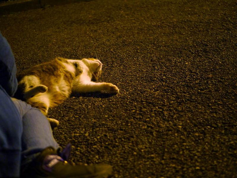 夜境内で転がるキジ白猫