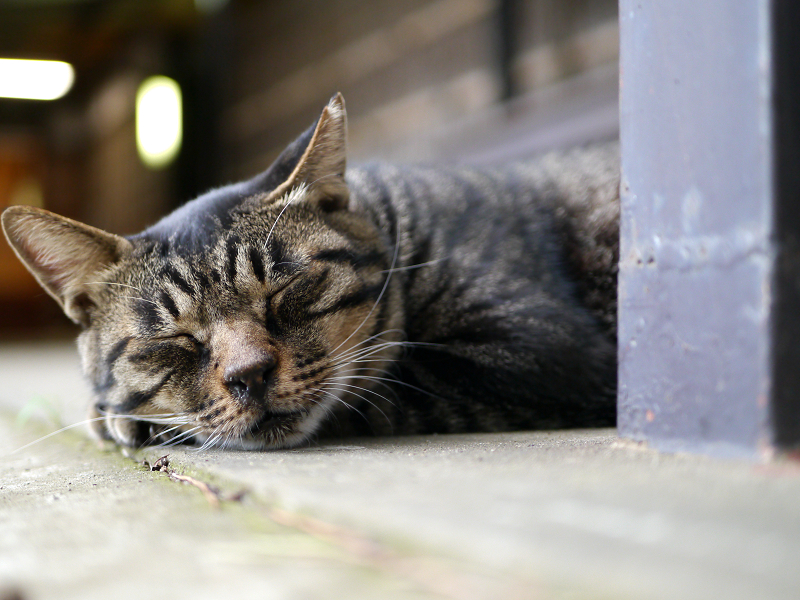 四角支柱とキジトラ猫2