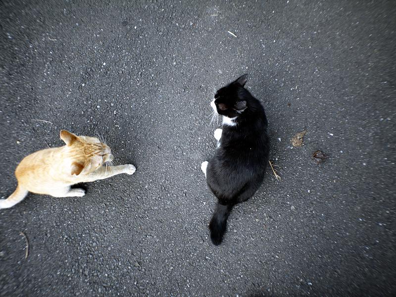 全然飽きずに暴れる猫たち1