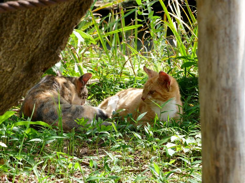 草むらの仔猫たち1