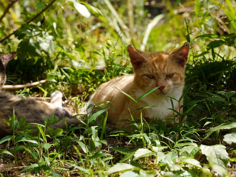 草むらの仔猫たち2