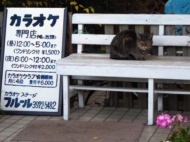 カラオケベンチと猫