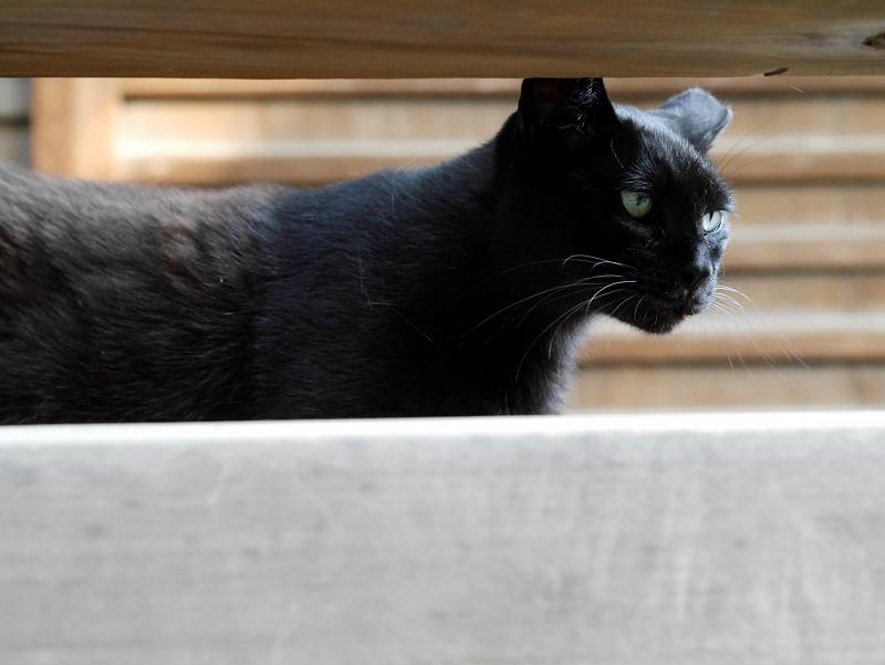 お堂黒猫1