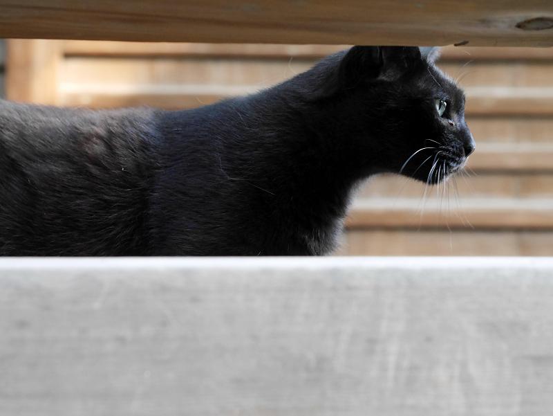 お堂黒猫2