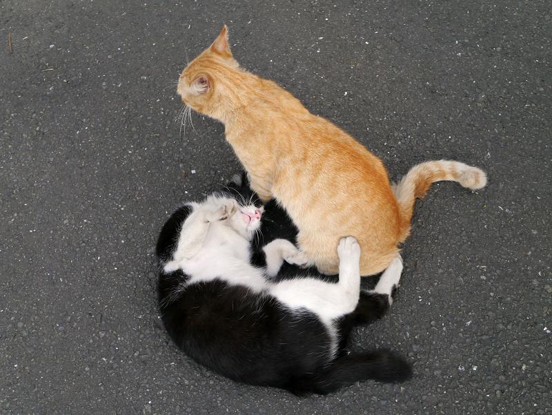 遂に暴れ疲れた猫たち1