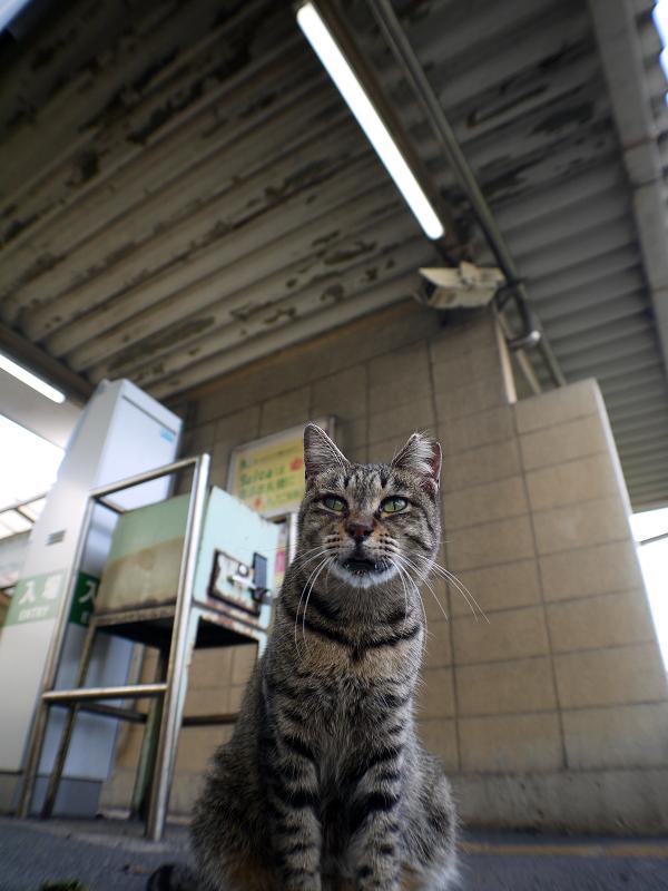 改札とキジトラ猫2