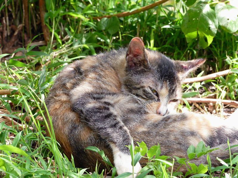 草むら腹なめ仔猫1