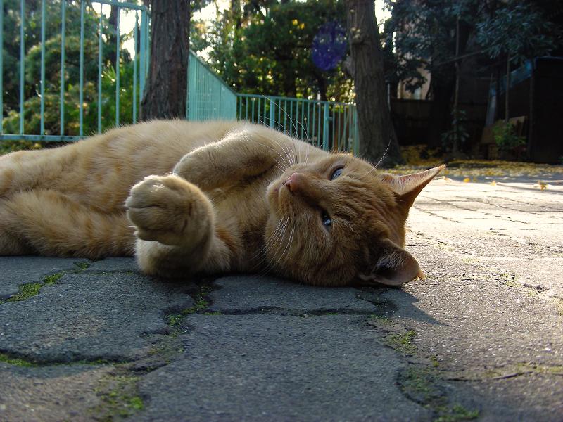 縁石茶トラ猫2