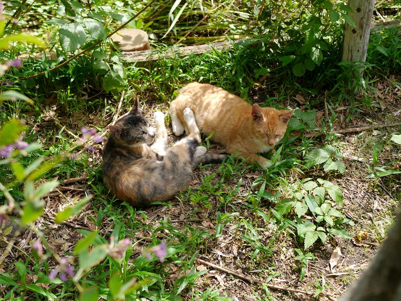 草むら毛繕い仔猫たち1