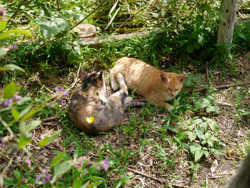 草むら毛繕い仔猫たち2