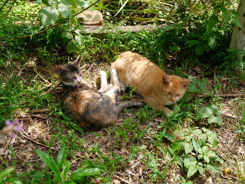 草むら毛繕い仔猫たち3