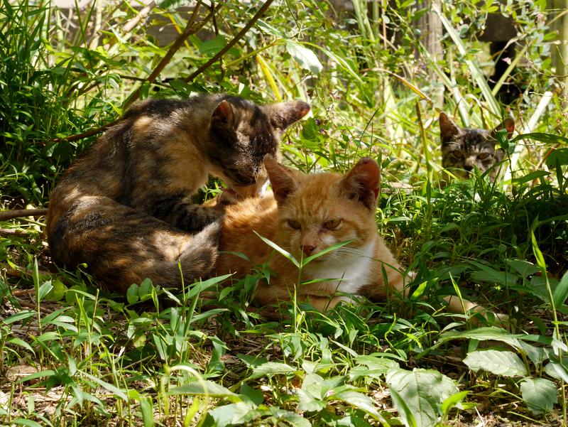 ポカポカ日差しと仔猫たち2