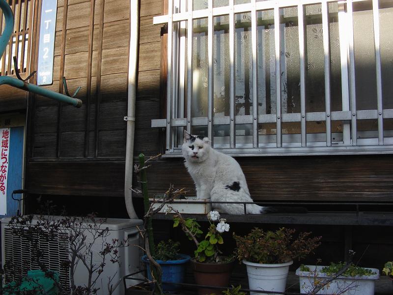 民家の窓と白黒猫1