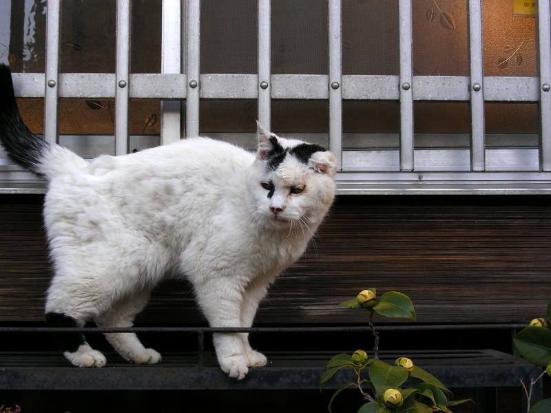 民家の窓と白黒猫2