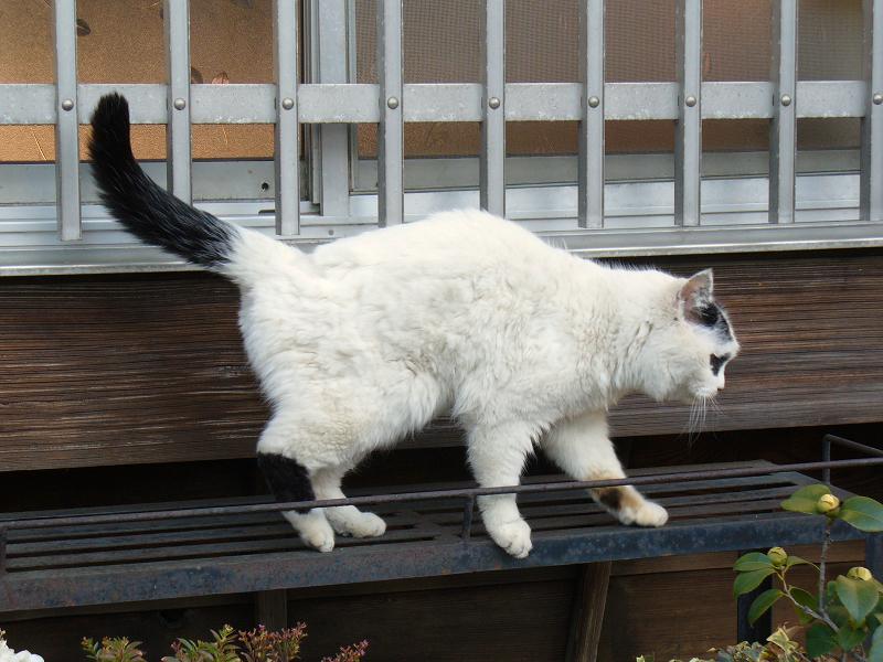 民家の窓と白黒猫3