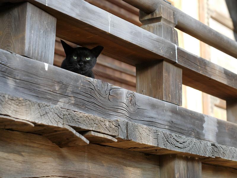 欄干黒猫1