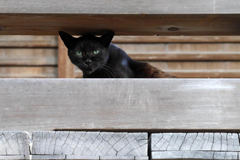 欄干黒猫2