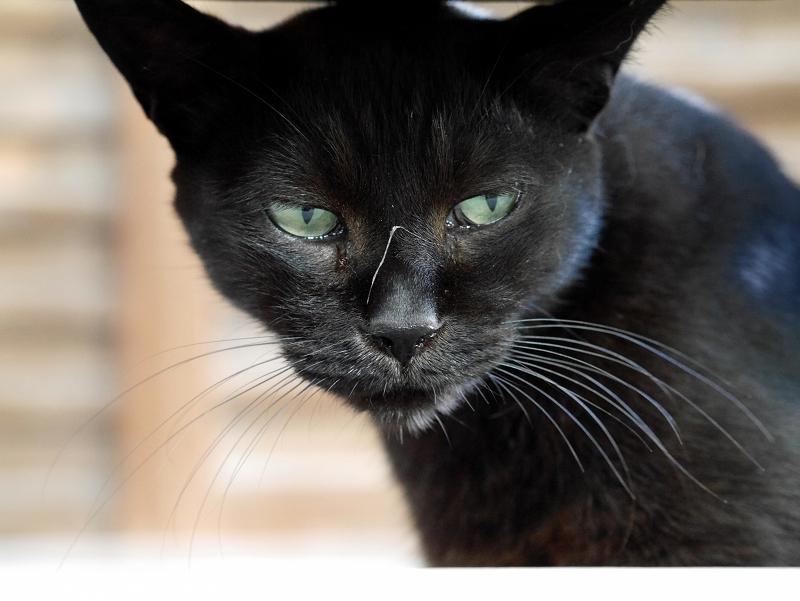 欄干黒猫3