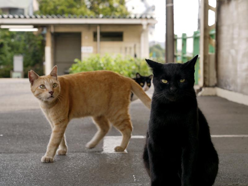 駅のホームと黒猫茶トラ猫黒白猫1