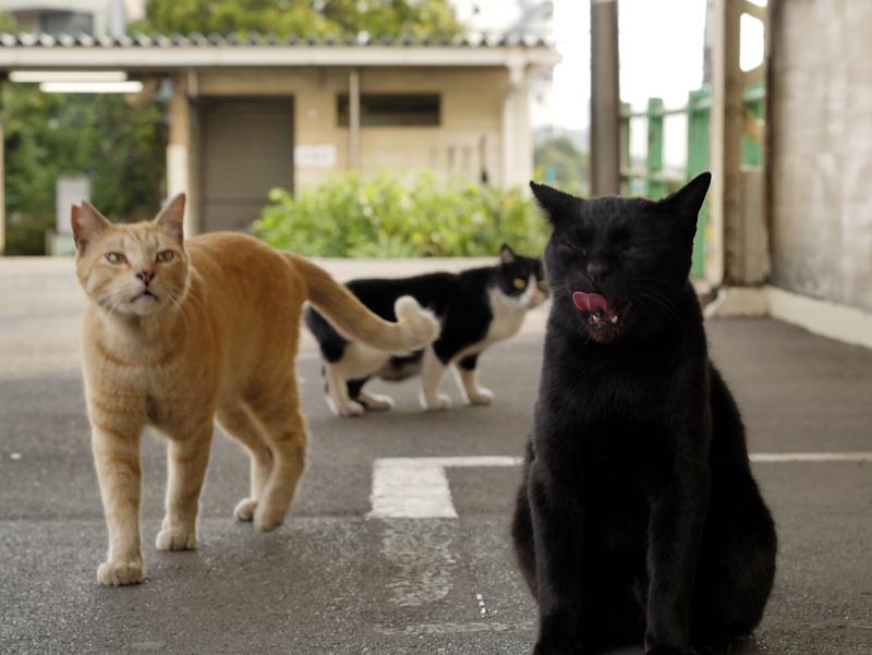 駅のホームと黒猫茶トラ猫黒白猫2