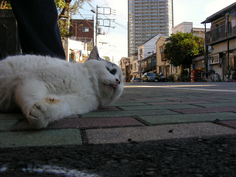 歩道に降りてきた白黒猫2