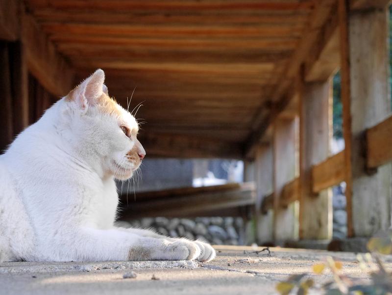 縁の下茶白猫2
