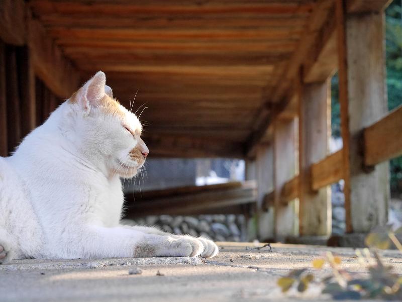 縁の下茶白猫3
