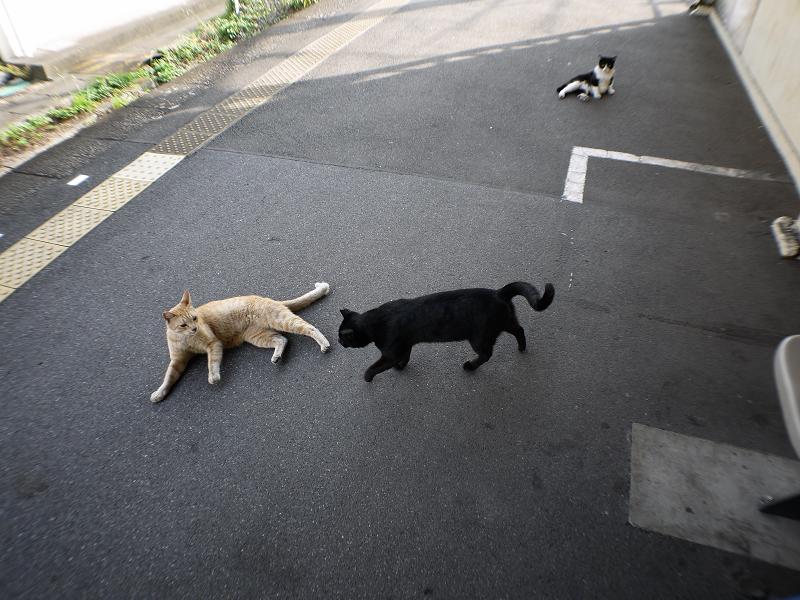 ホームで動いている猫たち1