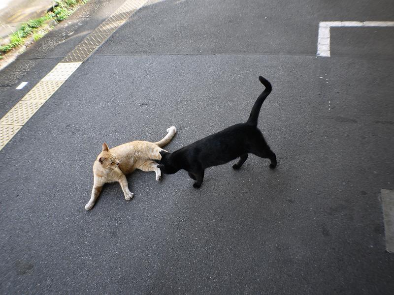 ホームで動いている猫たち2