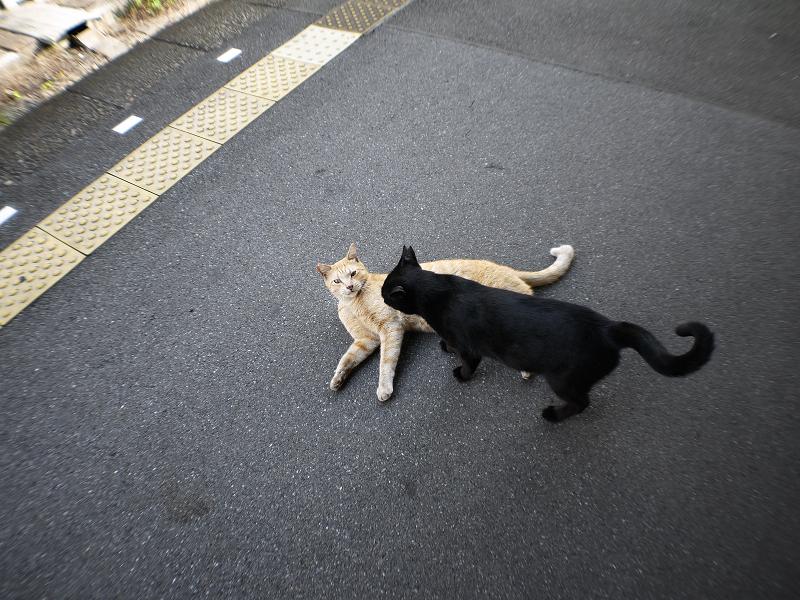 ホームで動いている猫たち3