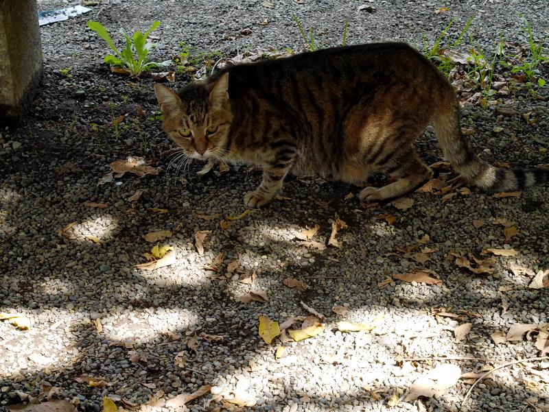 木漏れ日とサビ柄猫