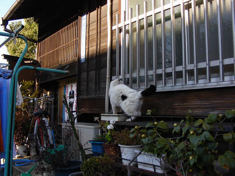 民家窓柵と白黒猫1