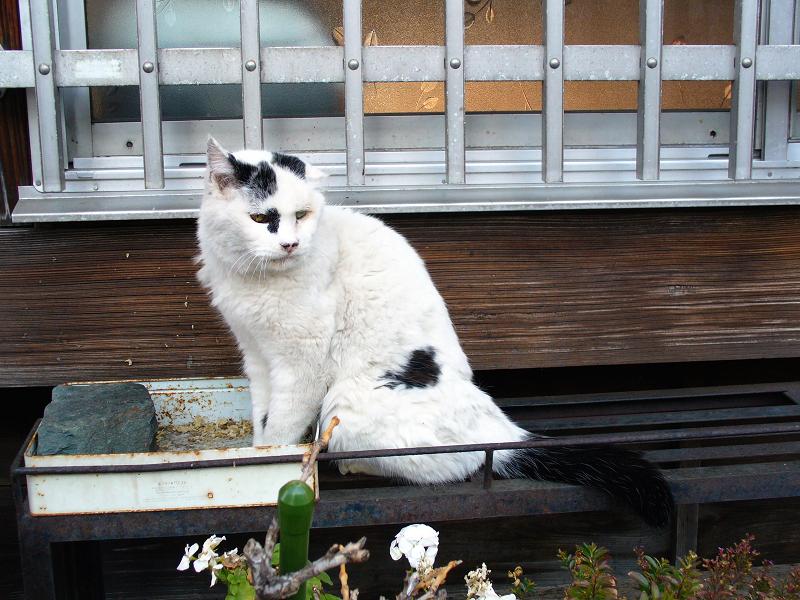 民家窓柵と白黒猫2