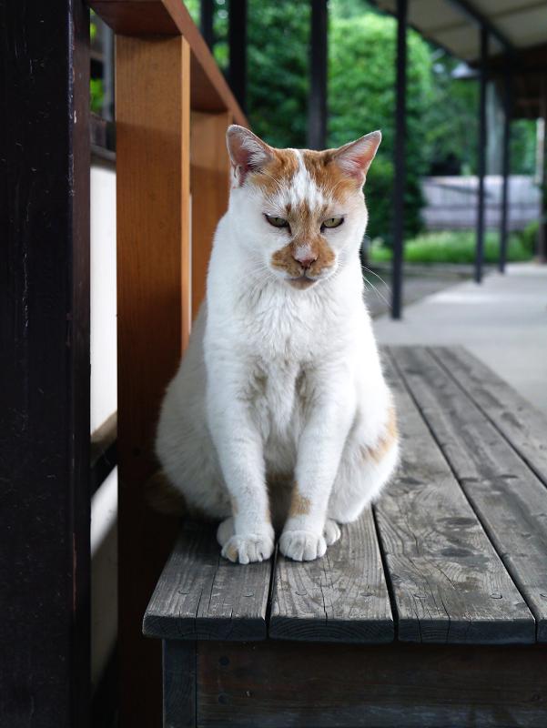 通路ベンチと茶白猫1