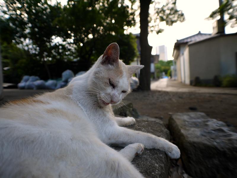 礎石茶白猫3